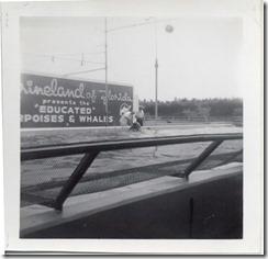 June 1964 Marineland of Florida 1